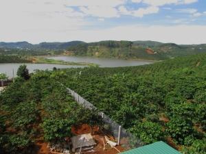 Dalat_Coffee Farm