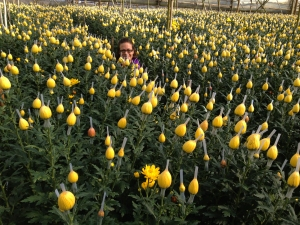 Dalat_Flower Farm1