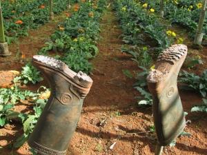 Dalat_Flower Farm2