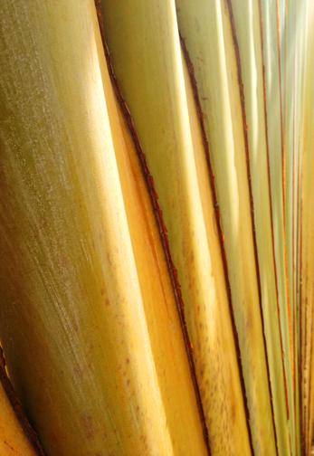 Palm base 2