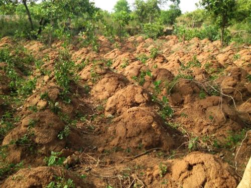 Yam Mounds