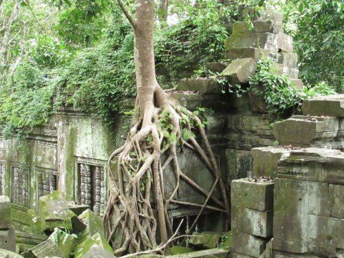 Bang Melea Tree Roots4